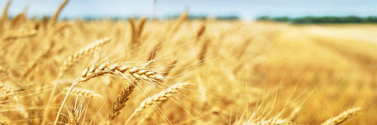 Wohnpaket Landwirtschaftliche Flächen Umwandeln