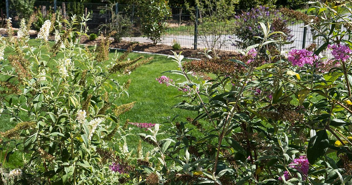 Ein grüner Garten